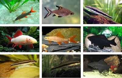 انواع ماهی شارک