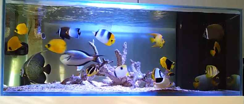 Fish Only Aquarium OnlyPet.ir