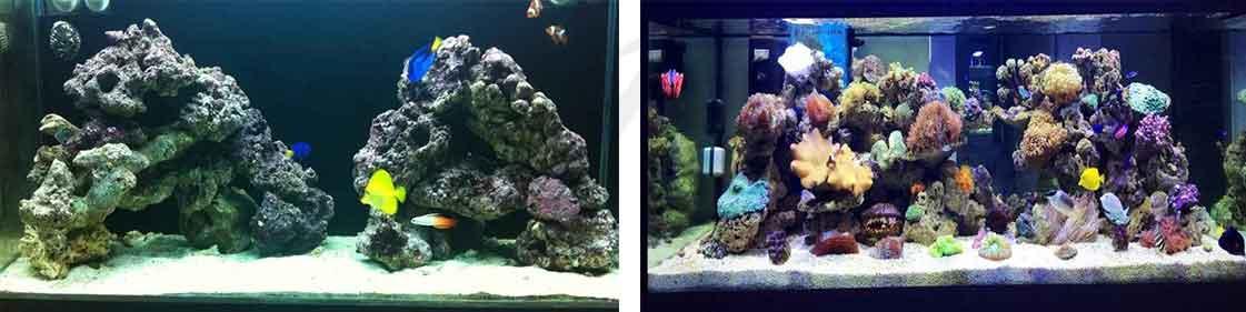 aquarium setup 01 onlypet.ir
