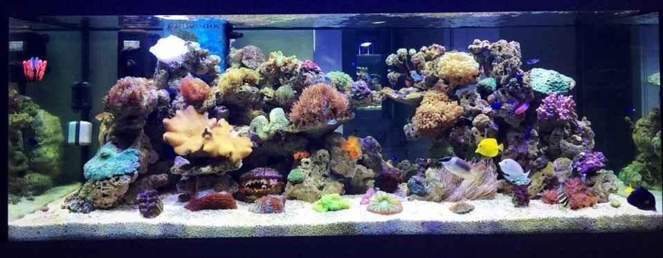 reef OnlyPet.ir