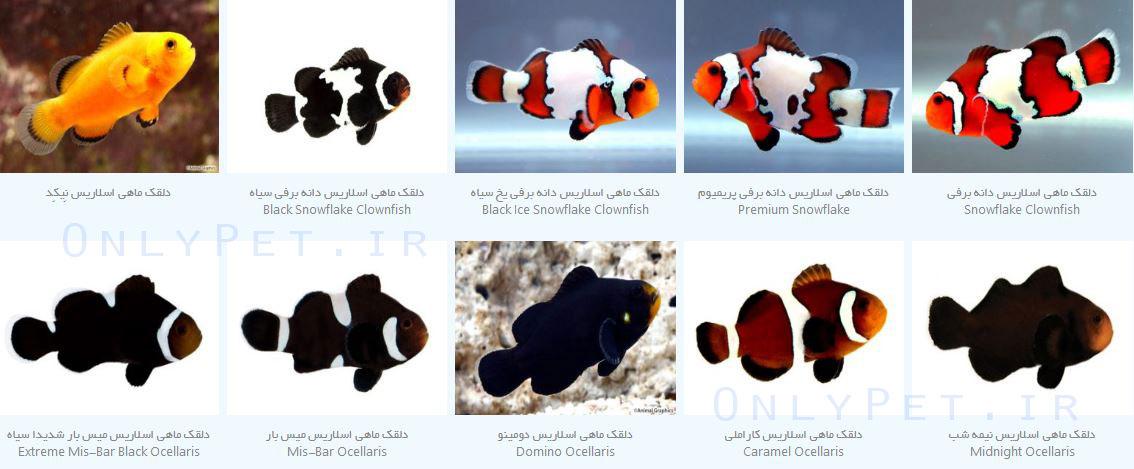 انواع دلقک ماهی اسلاریس
