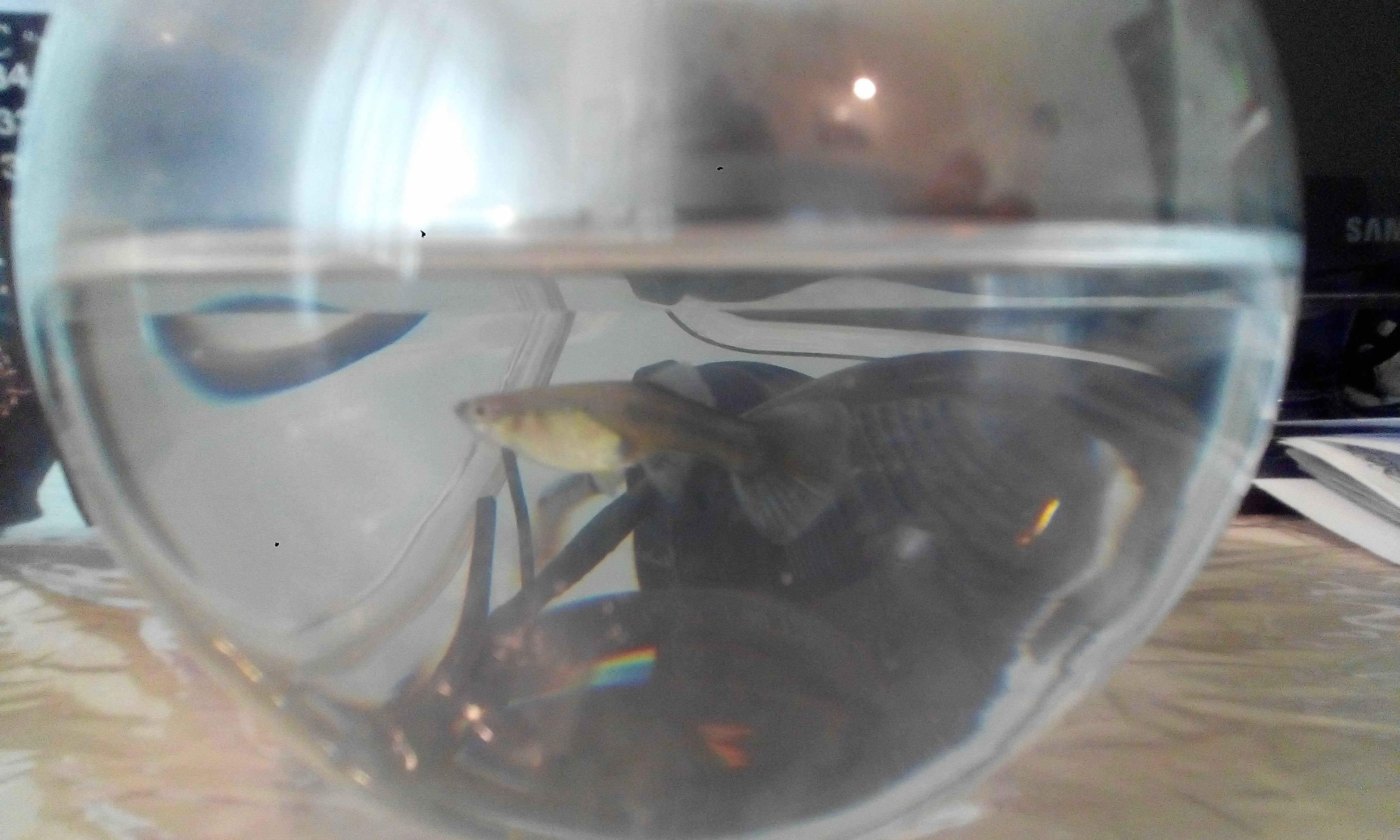 ماهی من