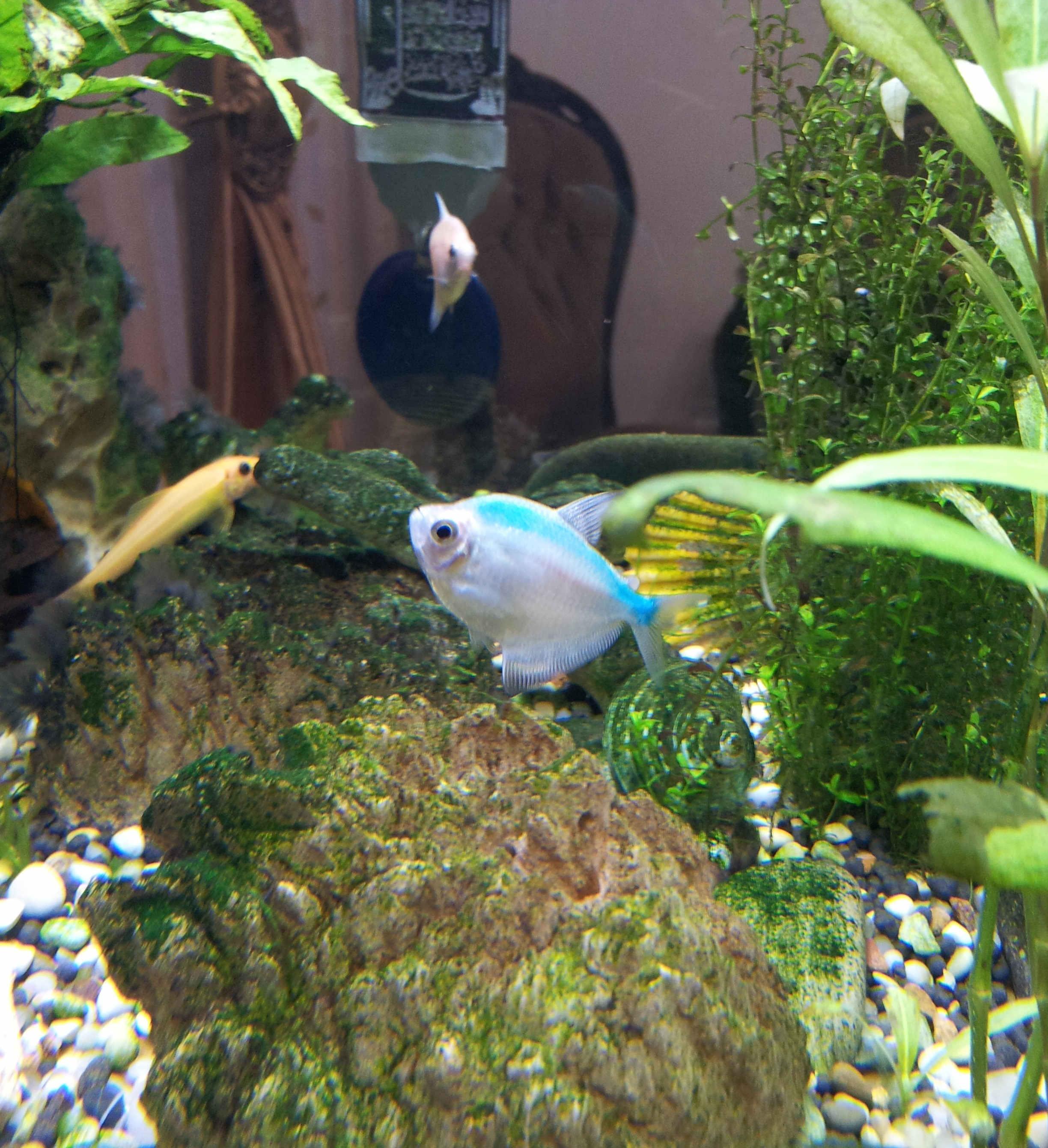 این ماهی رو میگم که اسمشو نمی دونم