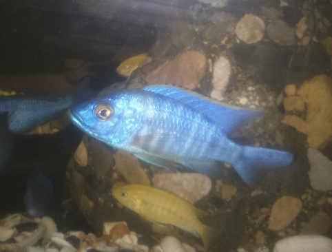 این ماهی اسمش چیه ممنون