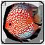 لیست مطالب داغ ماهیان